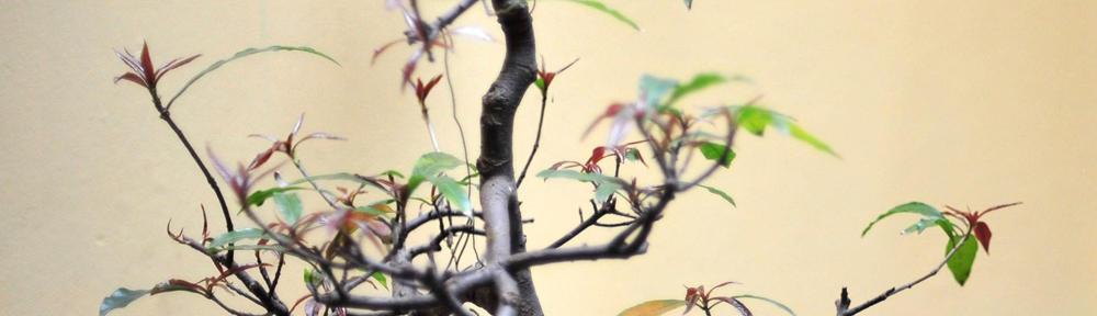 bonsaimuseum.org
